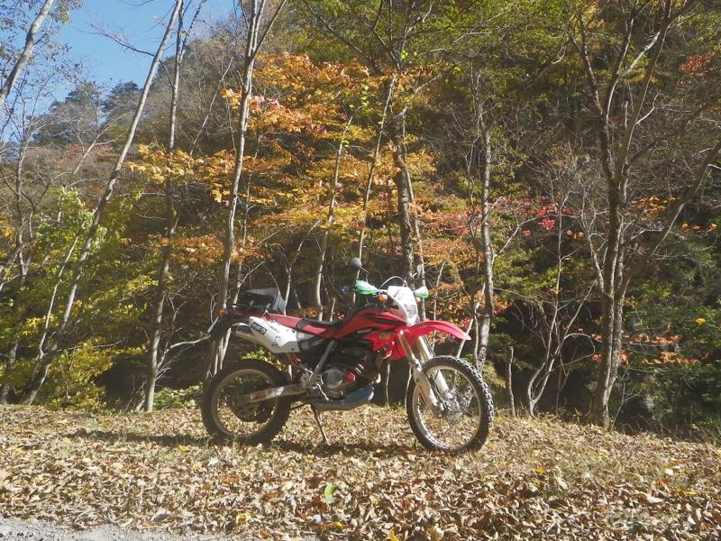 【散撮】紅葉ですね_f0141609_2216218.jpg