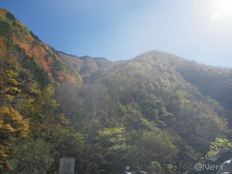 【散撮】紅葉ですね_f0141609_22162446.jpg