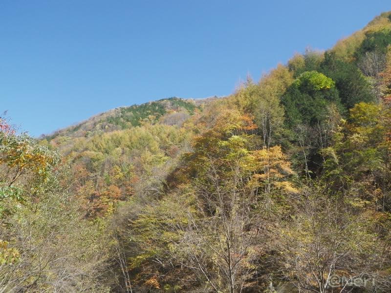 【散撮】紅葉ですね_f0141609_2216327.jpg