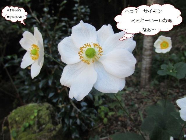 f0341616_17433271.jpg