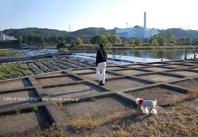 多摩川をお散歩_d0083623_14263545.jpg