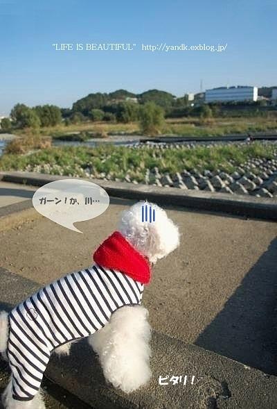 多摩川をお散歩_d0083623_1428913.jpg