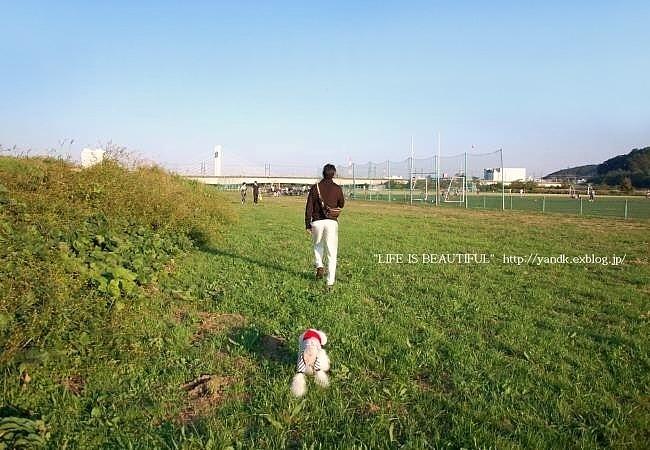 多摩川をお散歩_d0083623_1438372.jpg