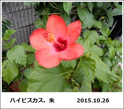 e0033229_1745113.jpg