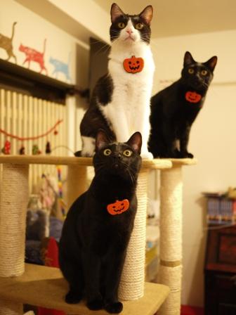 ハロウィンパンプキンキャット猫 ぎゃぉすてぃぁらみるきぃ編。_a0143140_223449.jpg