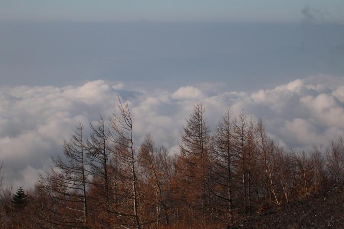 2015.10.25 冬鳥はまだ少ないですね・富士山麓・マヒワ他_c0269342_09172377.jpeg