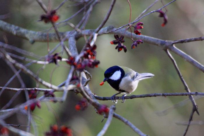 2015.10.25 冬鳥はまだ少ないですね・富士山麓・マヒワ他_c0269342_18063624.jpeg