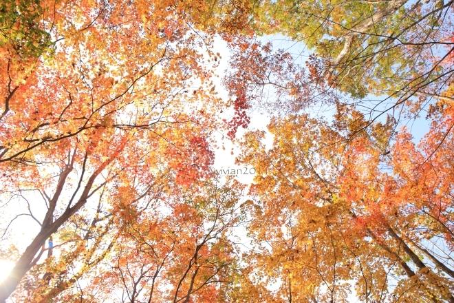 10月の写真クラブの撮影会 in 紅葉の観音沼(福島)_e0227942_22043675.jpg