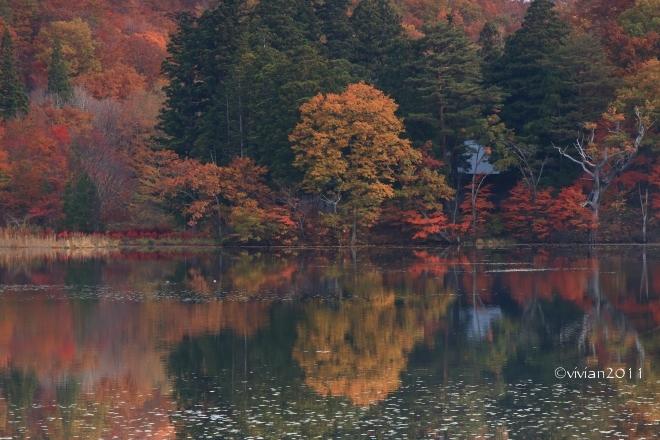 10月の写真クラブの撮影会 in 紅葉の観音沼(福島)_e0227942_22054979.jpg