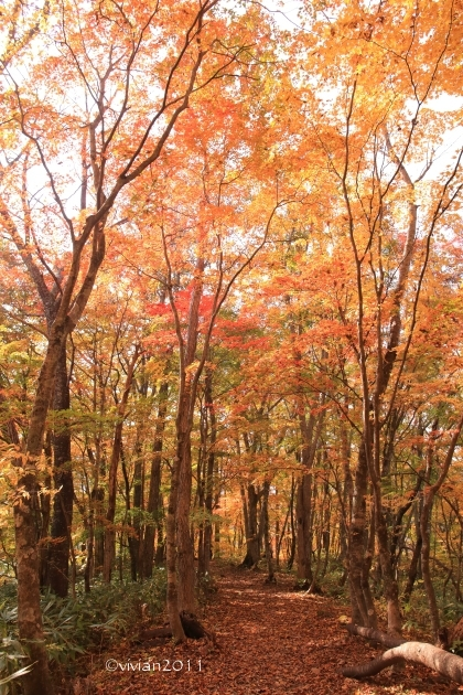 10月の写真クラブの撮影会 in 紅葉の観音沼(福島)_e0227942_22075900.jpg