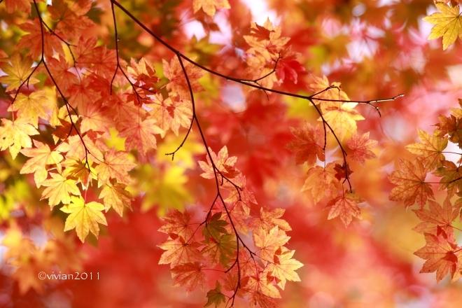 10月の写真クラブの撮影会 in 紅葉の観音沼(福島)_e0227942_22093874.jpg