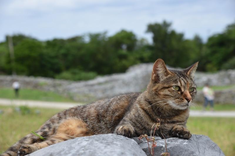 世界遺産でネコに会う_d0001843_22134872.jpg