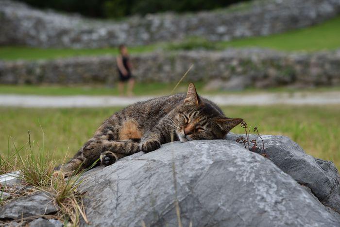 世界遺産でネコに会う_d0001843_222024100.jpg