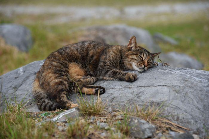 世界遺産でネコに会う_d0001843_22205389.jpg