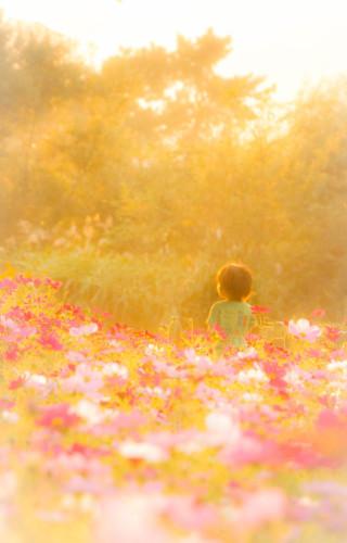 """この季節やっぱり """"秋桜""""_d0344864_18571917.jpg"""