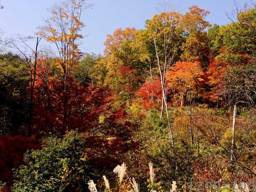 秋、降りて来ました〜_c0223095_142312.jpg