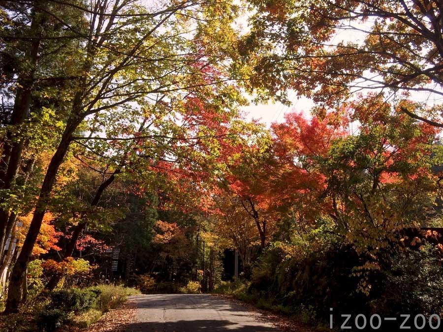 秋、降りて来ました〜_c0223095_14271.jpg