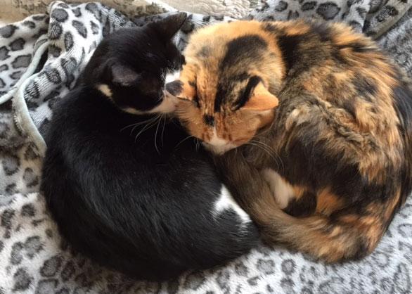 猫にとって危険な植物_d0071596_21461332.jpg