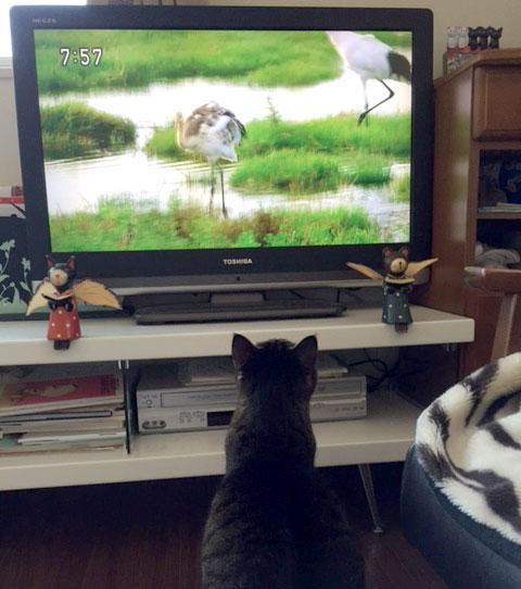 猫にとって危険な植物_d0071596_221114.jpg