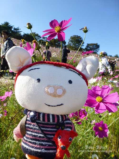秋の昭和記念公園 その2 コスモスの丘・他_d0128697_23125445.jpg