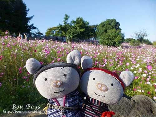 秋の昭和記念公園 その2 コスモスの丘・他_d0128697_23133355.jpg