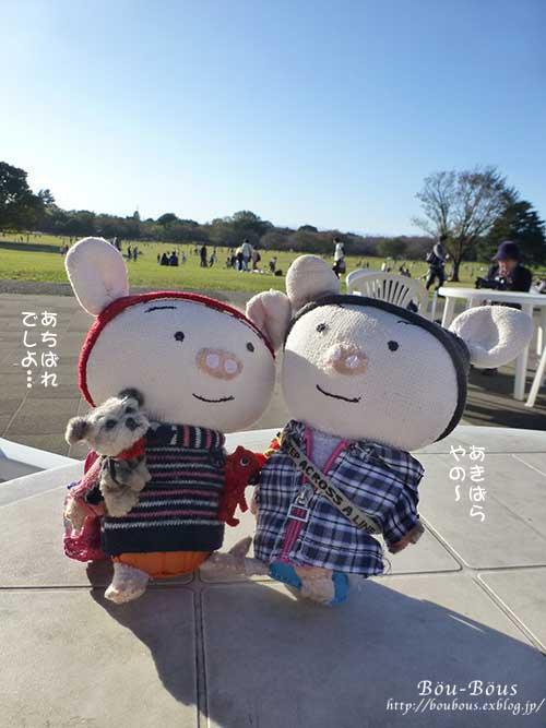 秋の昭和記念公園 その2 コスモスの丘・他_d0128697_23141379.jpg