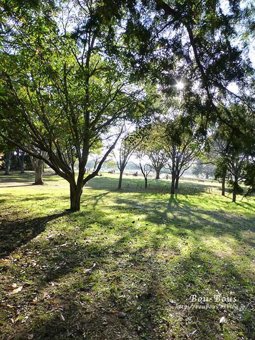 秋の昭和記念公園 その2 コスモスの丘・他_d0128697_2314827.jpg
