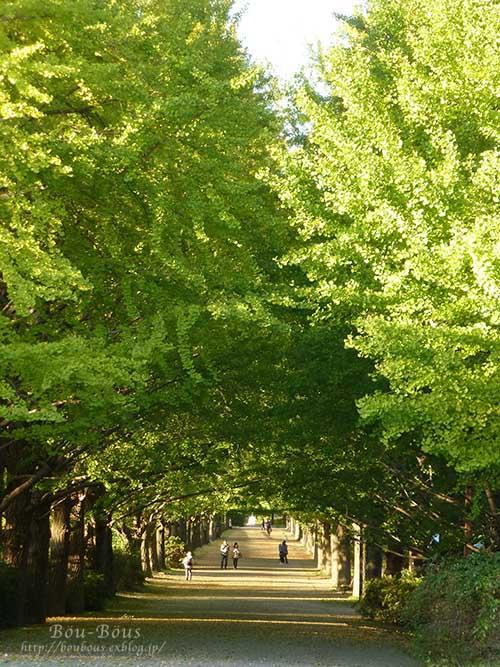 秋の昭和記念公園 その2 コスモスの丘・他_d0128697_23305970.jpg