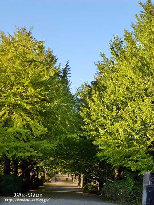 秋の昭和記念公園 その2 コスモスの丘・他_d0128697_2333542.jpg