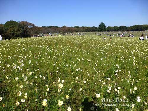 秋の昭和記念公園 その1_d0128697_2413779.jpg