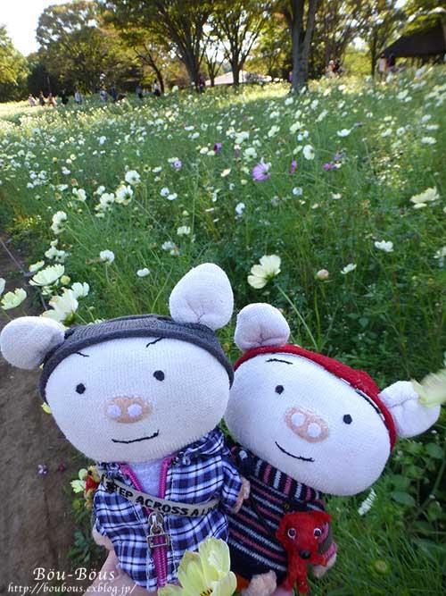 秋の昭和記念公園 その1_d0128697_2415320.jpg