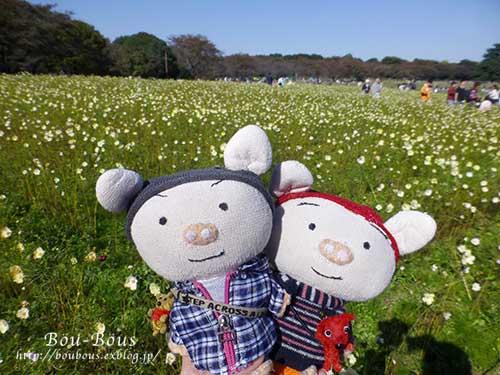 秋の昭和記念公園 その1_d0128697_2415736.jpg