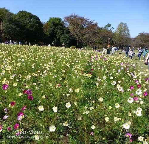 秋の昭和記念公園 その1_d0128697_24268.jpg