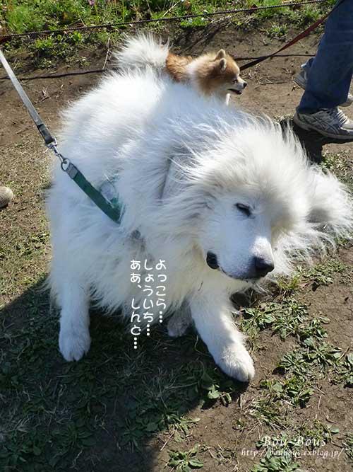 秋の昭和記念公園 その1_d0128697_2501295.jpg