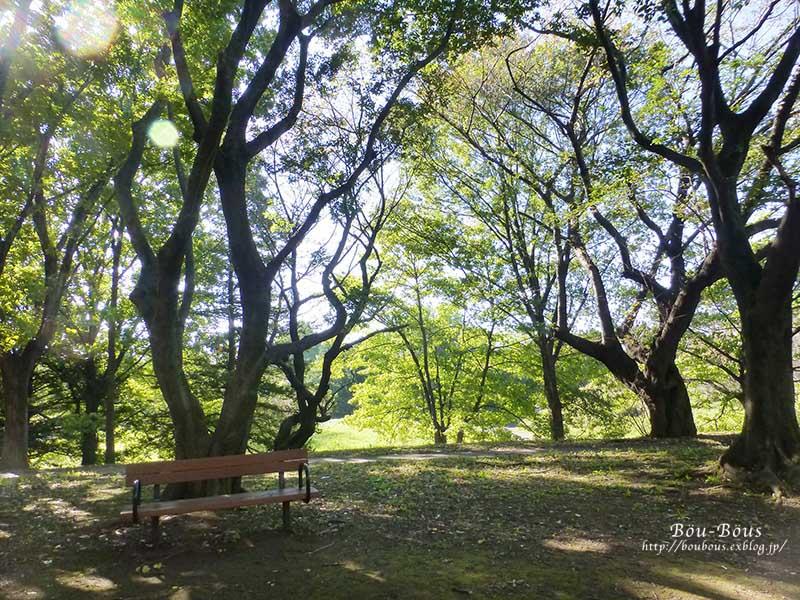 秋の昭和記念公園 その1_d0128697_254288.jpg