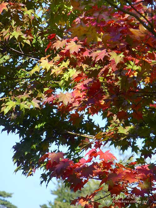 秋の昭和記念公園 その1_d0128697_2585188.jpg