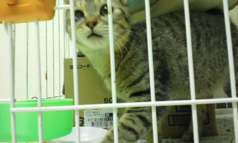 【移動先募集】センター(本所)収容猫(10/18訪問)_f0242002_11565229.jpg