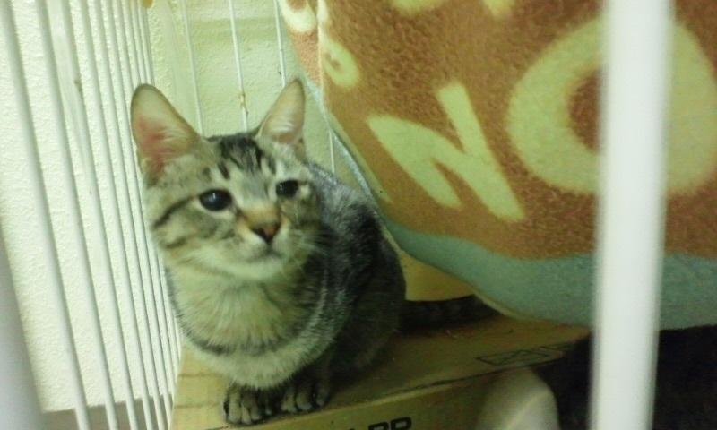 【移動先募集】センター(本所)収容猫(10/18訪問)_f0242002_1157235.jpg