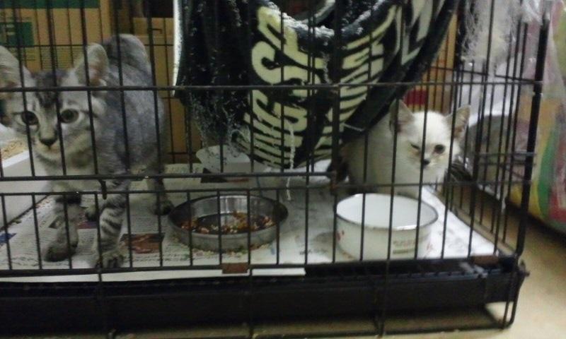 【移動先募集】センター(本所)収容猫(10/18訪問)_f0242002_11584582.jpg