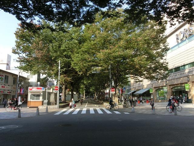 府中市(東京都)の全国初の取組み 道路や並木の点検、補修、清掃、剪定等を「包括管理委託」_f0141310_747385.jpg