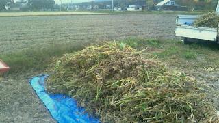 初めての大豆の脱穀_c0289116_18304267.jpg