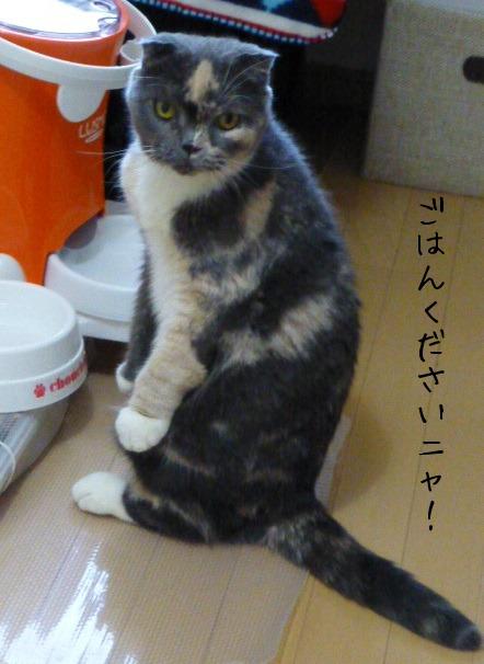お留守番 にゃんこ ギャラリー 【モカちゃん】_e0237625_17251142.jpg
