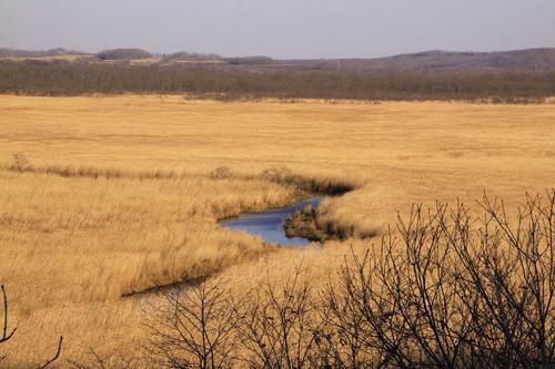 恒例・秋の湿原パトロール行ってきた 10月27日_f0113639_16135138.jpg