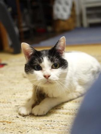 猫のお留守番 ヘキサちゃんヘプタちゃん編。_a0143140_22151137.jpg