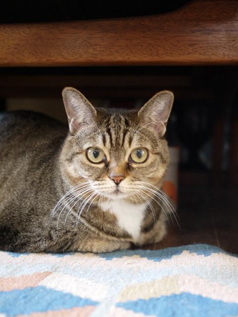 猫のお留守番 ヘキサちゃんヘプタちゃん編。_a0143140_2216038.jpg