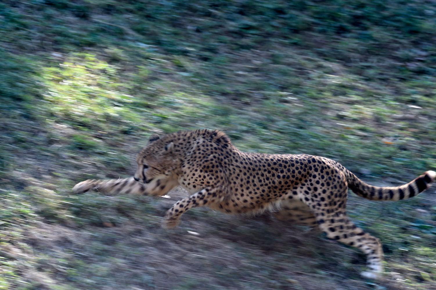 シュパーブは楽しそうに走る_b0023856_07282677.jpg