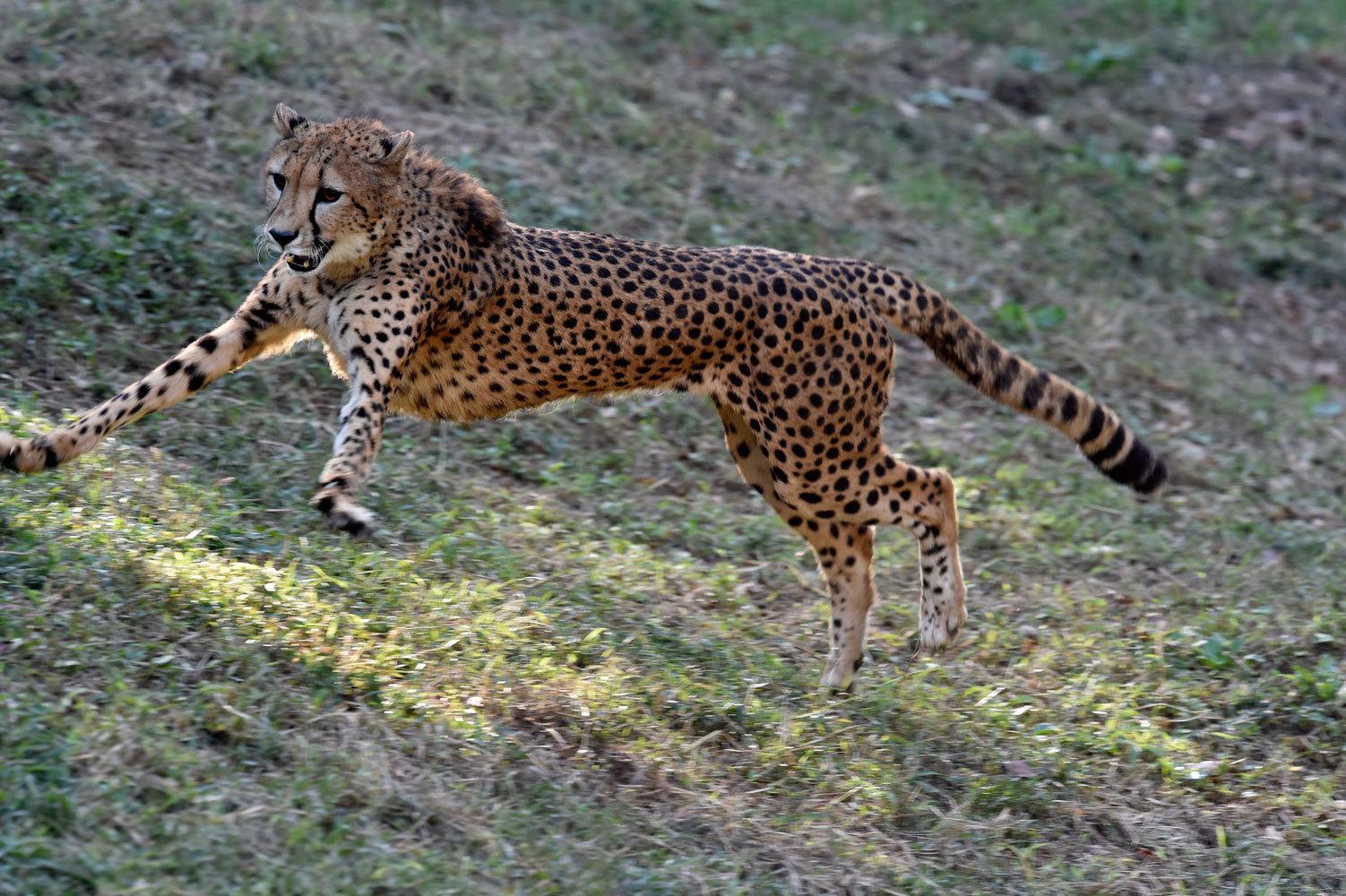 シュパーブは楽しそうに走る_b0023856_07291030.jpg