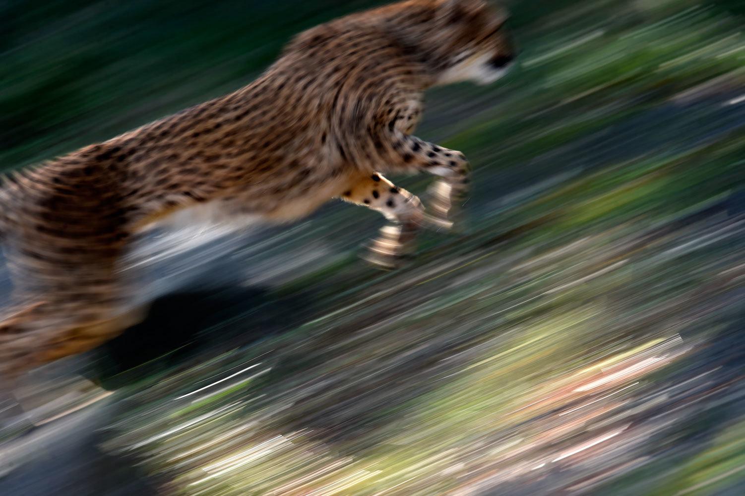 シュパーブは楽しそうに走る_b0023856_07324525.jpg