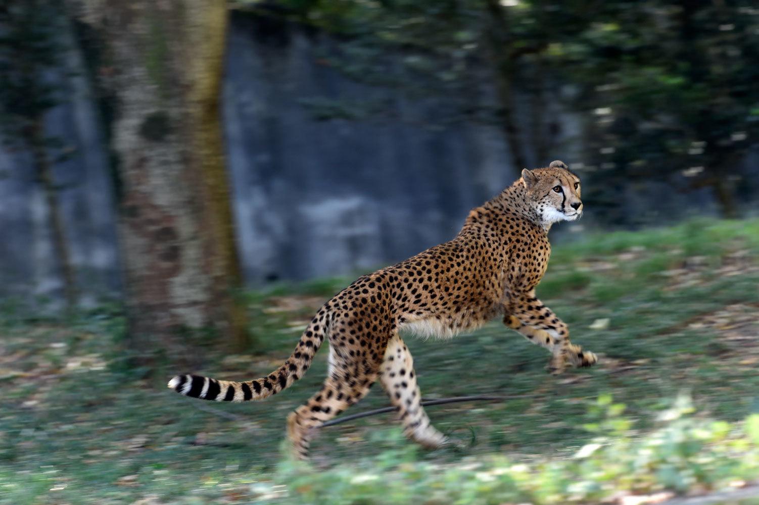 シュパーブは楽しそうに走る_b0023856_07342435.jpg