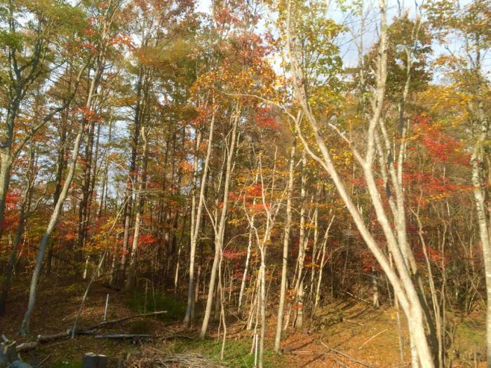 秋から冬へ_b0131865_01551092.jpg